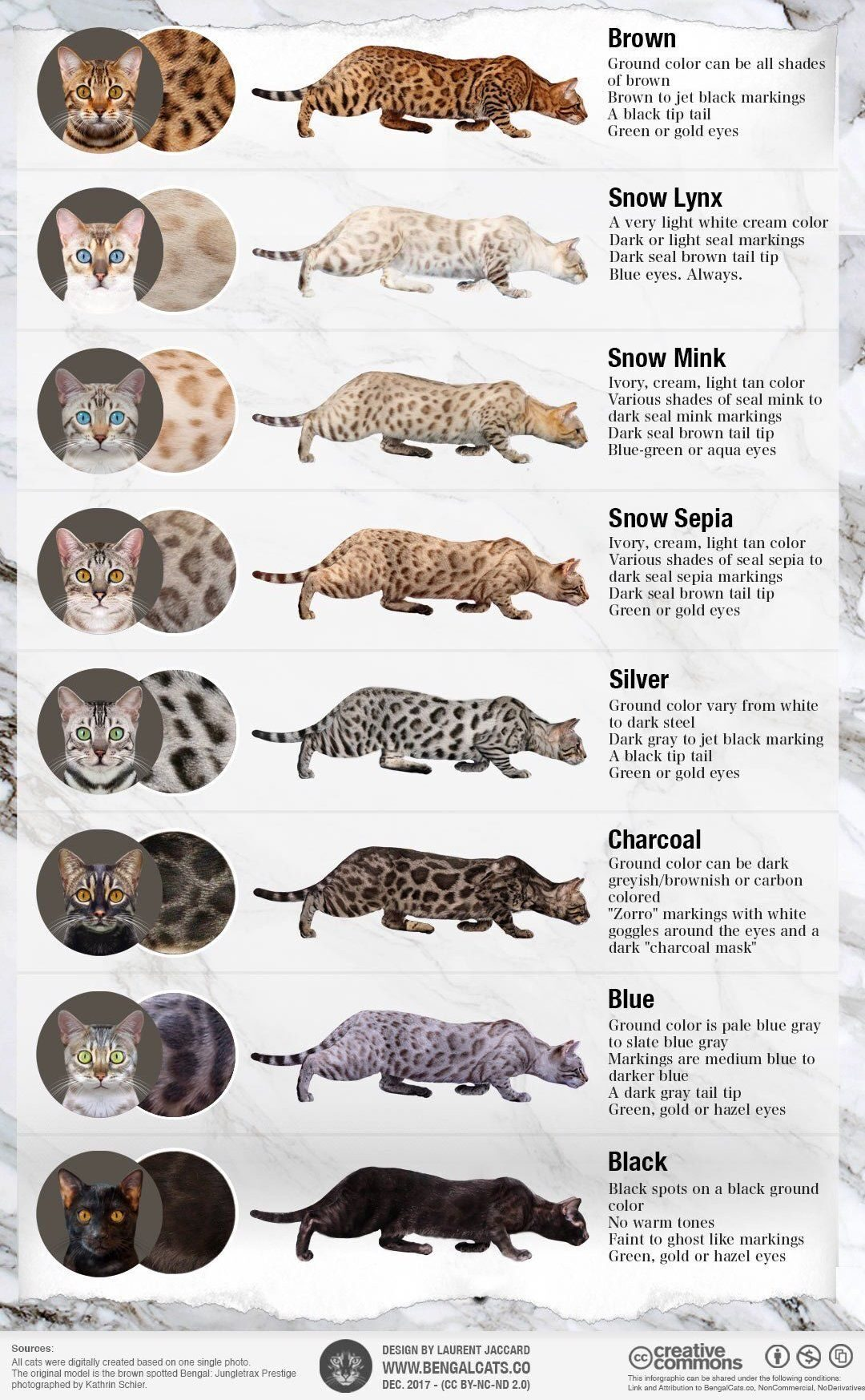Cat Color Patterns Simple Decoration